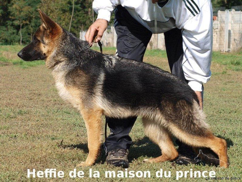 Position Heffie