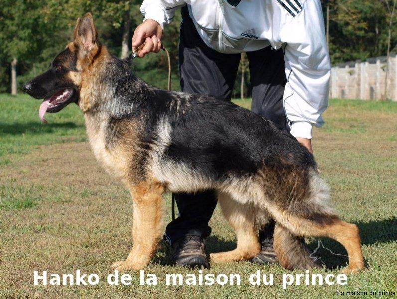 Position Hanko