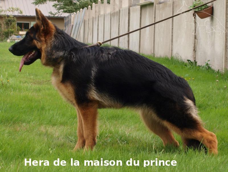 HERA de la maison du prince