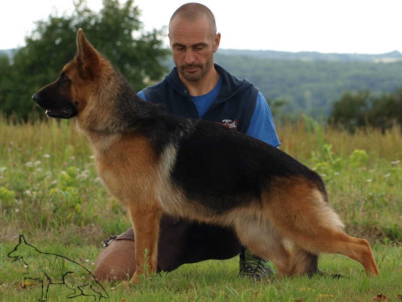 Championnat d'Italie de berger allemand SAS